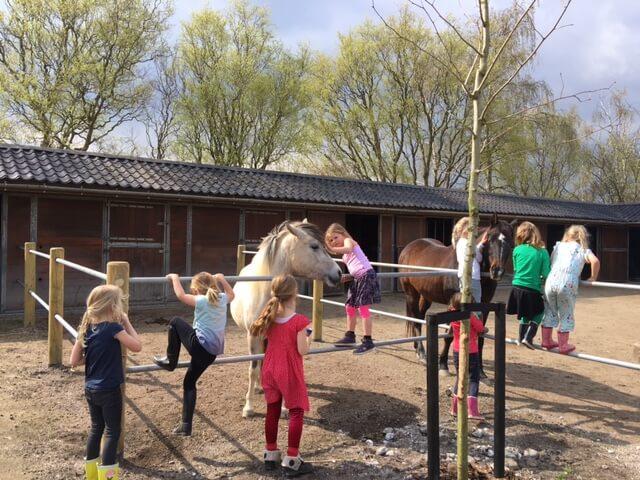 Paardenschool